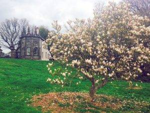 National Tree Week: Outdoors Guided Tour @ Castletown House and Parkland | Celbridge | County Kildare | Ireland
